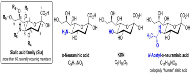 structure of sialic acid